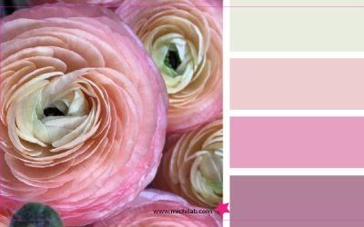 Trova la tua palette colori