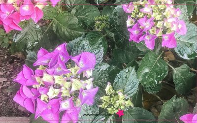 Marchi d'estate: fiorisce l'ispirazione