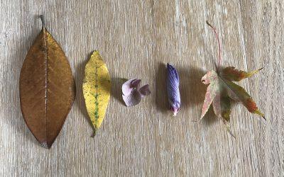 Marchi d'autunno: raccogli i frutti
